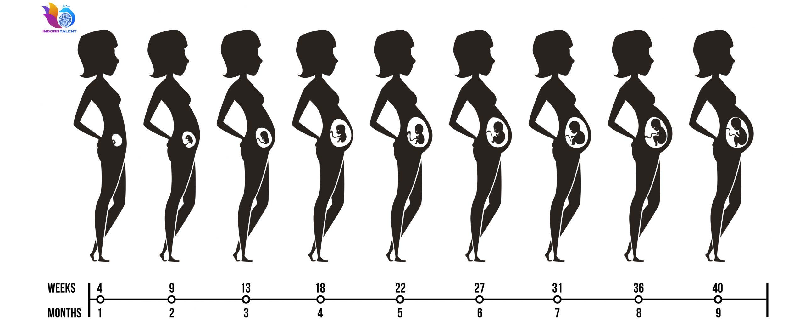 ลายเส้นนิ้วมือเริ่มก่อตัวพัฒนาภายในครรภ์ตั้งแต่ 13 สัปดาห์ และจะสมบูรณ์ไม่มีการเปลี่ยนแปลงภายใน 24 สัปดาห์